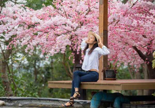 Top spots to view Sakura in Tokyo