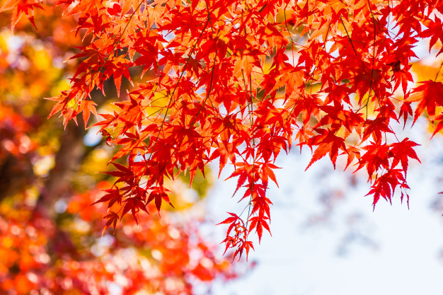 3 best places to view autumn leaves in Tokyo